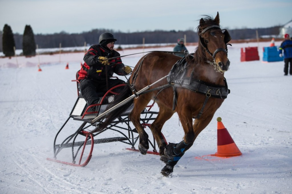 Photo: Olivier Croteau 04/02/2017 Becancour Quebec, Canada. Carnaval de Gentilly. Course de derby de chevaux ateles au Golf de Gentilly.
