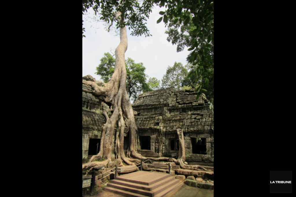 <p>Le temple de Ta Prohm au Cambodge.</p>