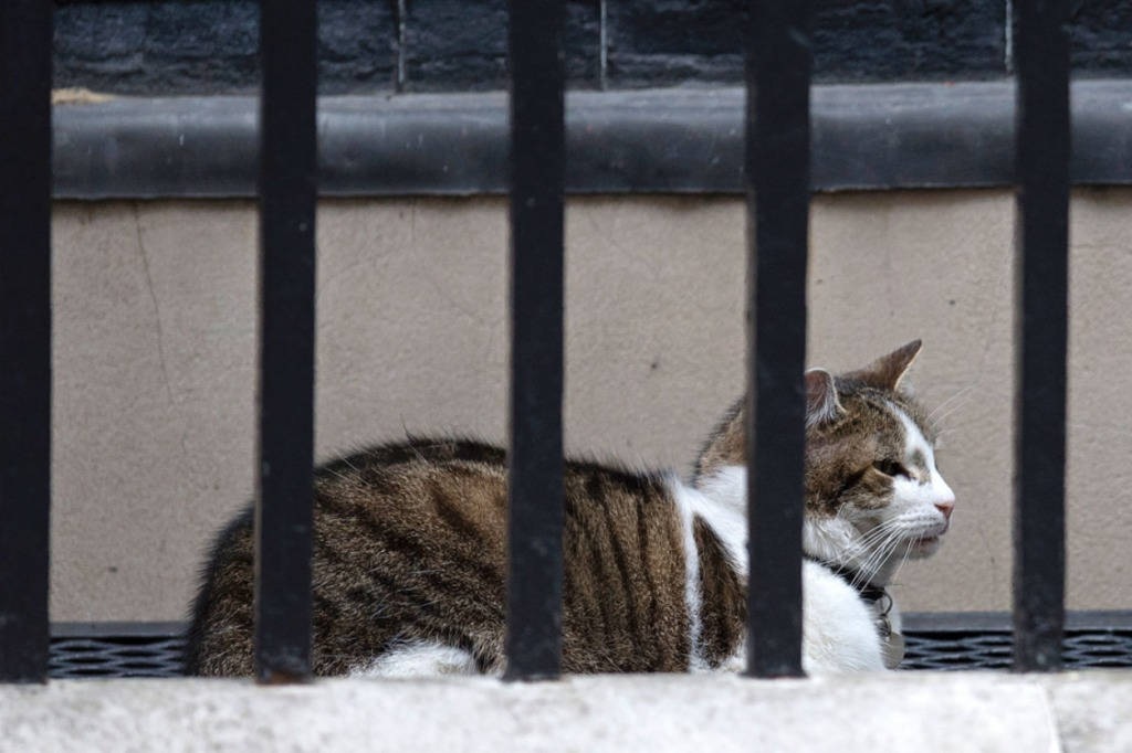 Larry le chat arpente le 10 Downing Streetdepuis 2011.