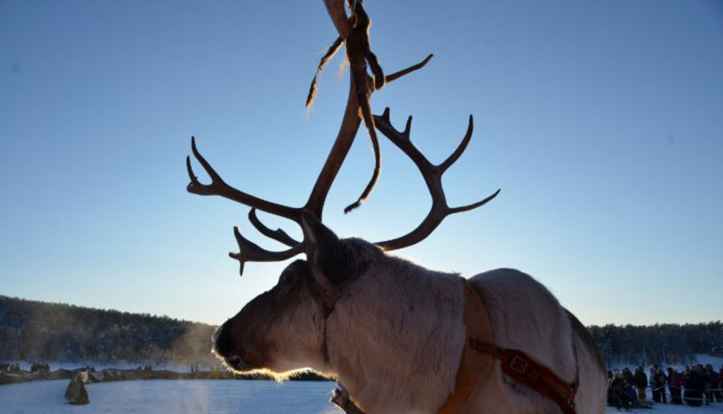 The Reindeer Belong to the Wind